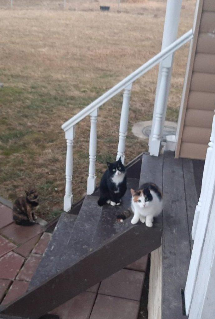Коты в деле